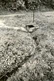 Ohvriallikas - kagust. Foto: M. Pakler, 12.05.1986.