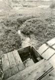 Ohvriallikas - loodest. Foto: M. Pakler, 12.05.1986.