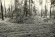 Kääbas - lõuna-edelast. Foto: M. Pakler, 07.05.1981.