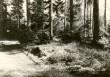 Kääbas - loodest. Foto: E. Väljal, 15.05.1985.