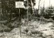 Kääbas - lõunast. Foto: E. Väljal, 15.05.1985.