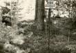 Kääbas - läänest. Foto: E. Väljal, 15.05.1985.