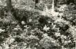 Kivikalme - idast. Foto: M. Pakler, 13.05.1986.