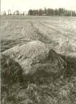 Kultusekivi - edelast. Foto: H. Joonuks, 1977.