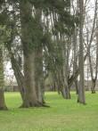 Vaade Maardu mõisa pargile peahoone juurest 11.05.2010. Ly Renter