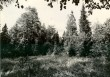 Pelgupaik - kagust. Foto: E. Väljal, 03.09.1984.