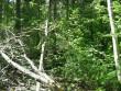 Metsateelt vaadates kivi tiheda võsa taga. Foto: A. Kivi, 20.05.2010.