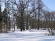 Avanduse mõisa park, 15625 vaade peahoone taga olevale pargiosale pilt: Anne Kaldam  aeg: 14.03.2011