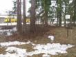 Kääbas. Foto: Tõnis Taavet, 06.04.2011.