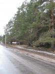 Kääbastik maanteelt pildistatuna. Foto: Tõnis Taavet, 06.04.2011.