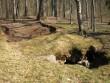 Reelika Niit 27.04.2011