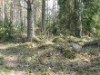 Kivikalme. Foto: Tõnis Taavet, 26.04.2011.