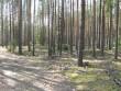 Kääbas. Foto: Tõnis Taavet, 26.04.2011.