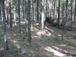 Kääbaskalmistu. Foto: Tõnis Taavet, 09.06.2011.