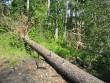 """Ohverdamiskoht """"Ugurimägi"""" reg nr 10951. Foto: Ingmar Noorlaid, 27.07.2011."""