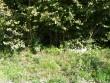 Vaade võimalikule kivikalmele ja ohverdamiskohale lõunast. Foto: Triin Äärismaa, 16.08.2011.