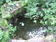 Luulupe allika kaev. Foto: R. Peirumaa, august 2011.