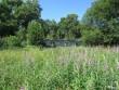 15869 Võhmuta mõisa park, 06.07.2011,Anne Kaldam , vaade rohtukasvanud pargile