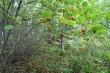 Maastik kivi oletatavas paiknemise piirkonnas. Foto: 20.09.2011.