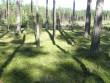 Kääbastik. Foto: Tõnis Taavet, 07.09.2011.