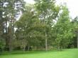 Vaateid sulgevad puud Kalli Pets 07.09.2011