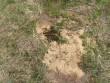 Kalmistu reg nr 9103, 26.05.2011, Foto: Tõnno Jonuks