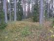 Kääbastik. Foto: Tõnis Taavet, 26.10.2011.