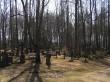 Raudristid Vastseliina kalmistul  Autor Martti Veldi  Kuupäev  28.03.2007