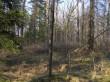 Võsastunud mäelagi. Foto: Martti Veldi, 30.03.2007.