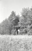 Kääbas  Foto: A. Kiisla 1967