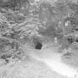 Pelgupaik, Foto: A. Kiisla 1967