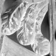 Detail. Foto: E. Raikküla