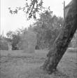 Üldvaade, graniit. Foto: T. Kohv, 1967