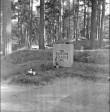 Üldvaade. Foto: H. Kõlar, 1971