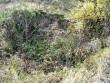 Rebala kaitsealal korstnajäänused? Foto: J. Vali 22.10.2004